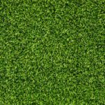 Image of Green grass background